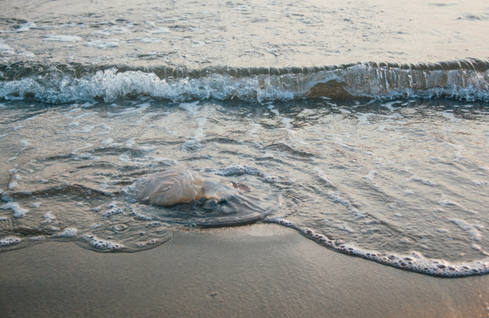Đừng chạm vào các sinh vật, nếu thấy chúng trôi dạt trên bãi biển. Nguồn: Pexels