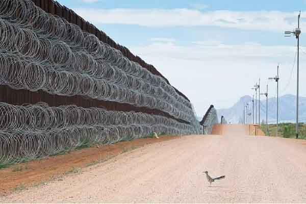 Bức ảnh chú gà lôi 'bị phong tỏa' chiến thắng cuộc thi nhiếp ảnh quốc tế
