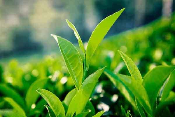 Nghiên cứu công nghệ sản xuất sản phẩm hương liệu nguồn gốc thiên nhiên dạng vi hạt