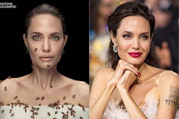 Angelina Jolie trong bộ ảnh bị ong bâu kín người, kêu gọi bảo tồn loài ong bản địa
