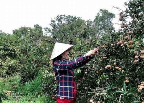 Hậu Giang còn hơn 2.701 tấn nông sản tồn đọng
