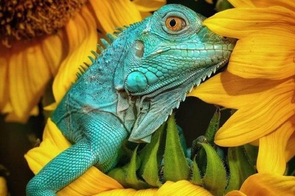 2 tác phẩm chụp tại Quảng Bình, Quảng Ngãi lọt top 50 bức ảnh đẹp nhất Animals2020 của Agora