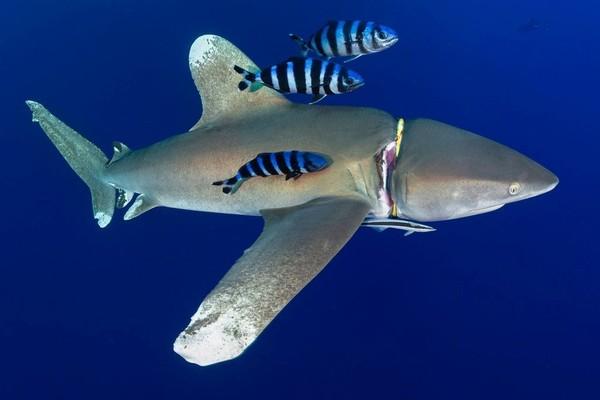Loạt ảnh ấn tượng cho thấy con người đã hủy hoại đại dương như thế nào