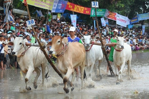 An Giang dừng tổ chức lễ hội đua bò Bảy Núi vì dịch Covid-19