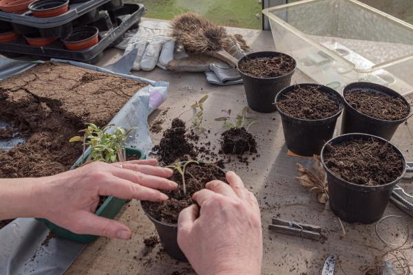 Cách tiết kiệm hạt giống thân thiện và hữu ích