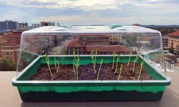 Triển vọng loại đất có thể 'tự tưới nước' cho cây trồng