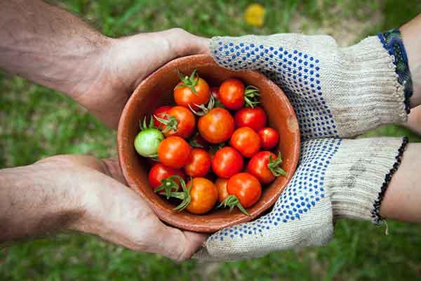 Tìm hiểu các ý tưởng kinh doanh trang trại cho lợi nhuận cao nhất