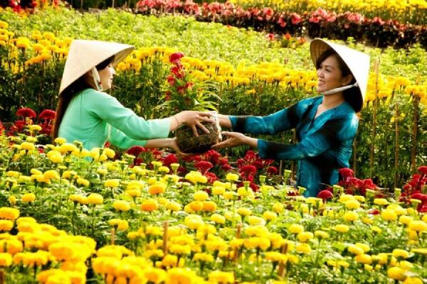 ĐBSCL những làng hoa, kiểng đã chìm trong sắc Tết
