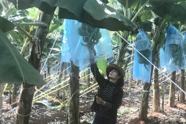 Nông nghiệp công nghệ cao mang về trái ngọt cho nhà đầu tư