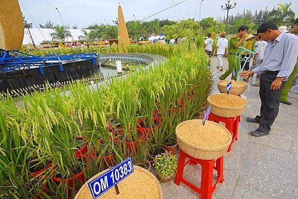 Vĩng Long sẽ là chủ nhà của Festival lúa gạo lần thứ 5