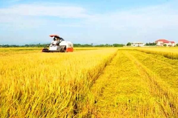 Xuất khẩu gạo, trở lại với ngưỡng 3 tỷ USD