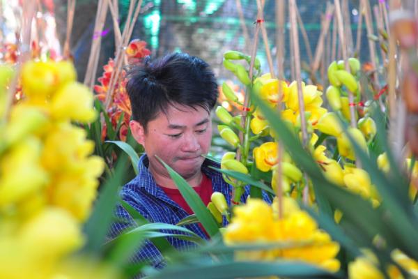 Hoa Địa lan nở trước Tết, nhà vườn buồn thiu