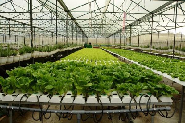 Thái Nguyên sẽ có khu nông nghiệp ứng dụng công nghệ cao