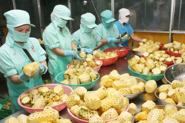 Ngành rau quả đặt mục tiêu xuất khẩu cao gấp 3 lần lúa gạo