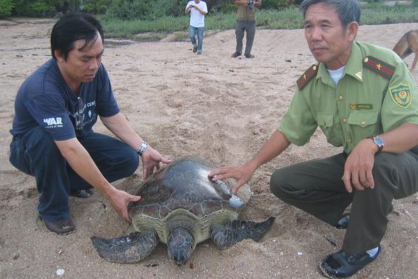 Đến Vườn quốc gia Núi Chúa cùng tham gia bảo tồn Rùa Biển