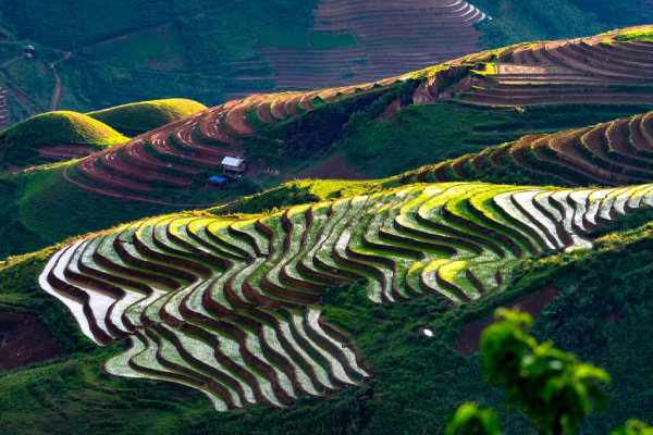 """Nhiều tỉnh thu """"trái ngọt"""" nhờ phát triển Du lịch nông nghiệp"""