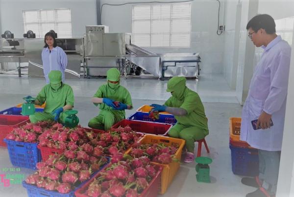 Canada hỗ trợ Hợp tác xã Nông nghiệp tìm kiếm thị trường xuất khẩu