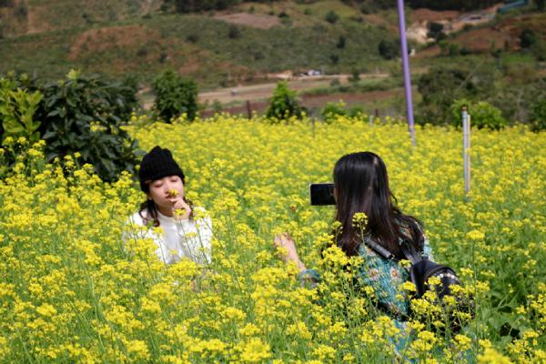 Có một mùa hoa Cải nở vàng góc trời