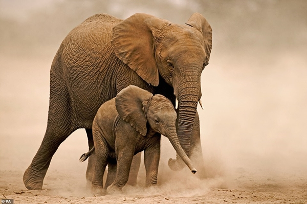 Thiên nhiên đang trong tình trạng 'rơi tự do', động vật hoang dã giảm hơn 2/3