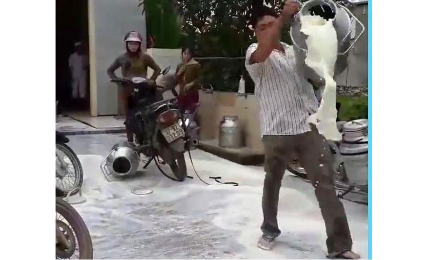 Bị ép giá, nông dân Nghệ An đổ sữa ra đường