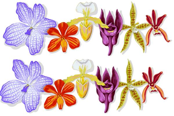 Google Doodle đổi giao diện thành hình hoa lan, vì sao?