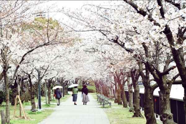Việt Nam sẽ giới thiệu du lịch tại 3 thành phố lớn của Nhật Bản