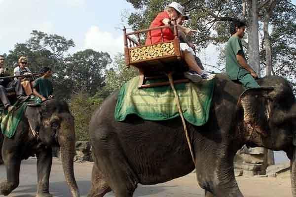 Campuchia cấm cưỡi voi ở đền Angkor Wat