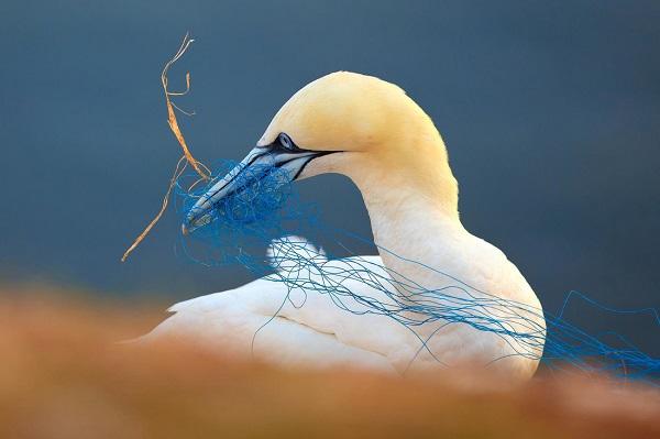 Thế giới chim muông cực đẹp trong mắt nhiếp ảnh gia