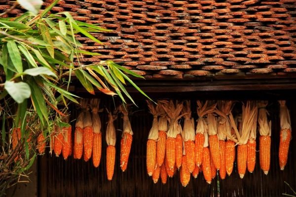 Đường Lâm - Có một ngôi làng đưa ta về miền ký ức