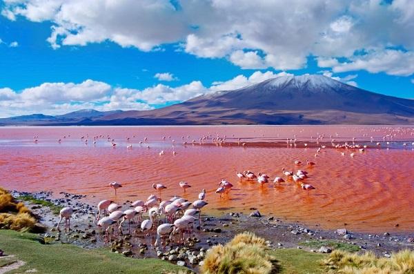 Hồ nước có màu hồng vừa đẹp vừa lạ mắt