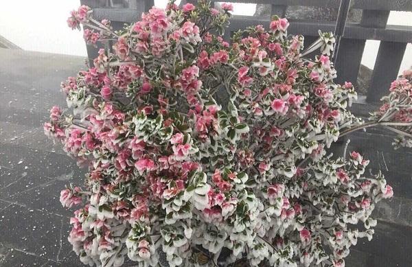 """""""Tuyết rơi mùa hè"""" ở đỉnh Fanxipan"""