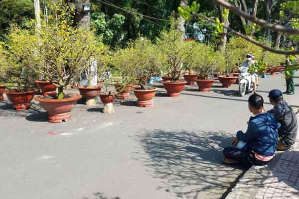 Nhiều nhà vườn đã bắt đầu giảm giá hoa Tết