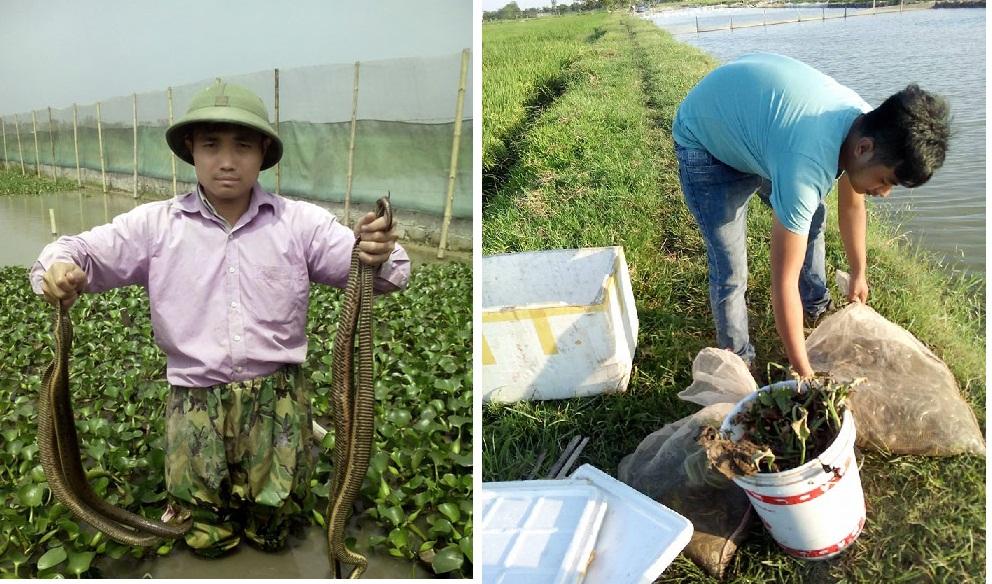 Cận cảnh trang trại nuôi hơn 300 con rắn ở ngoại thành Hà Nội