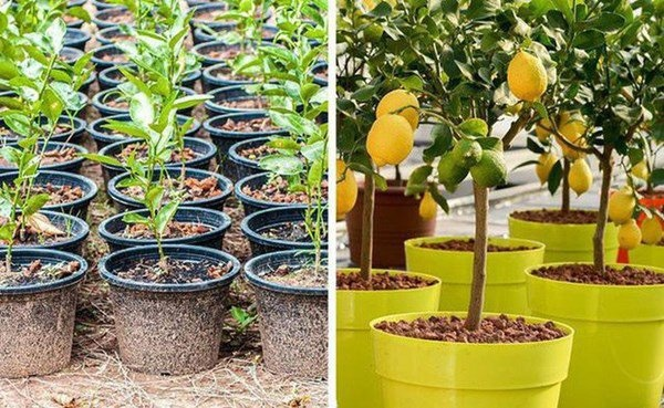 Mách bạn cách trồng ba loại cây tại nhà siêu dễ
