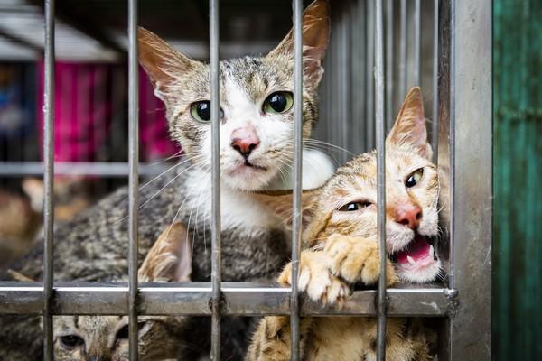 Đặc sản 'Tiểu hổ': Vấn nạn tàn ác với động vật tại Việt Nam