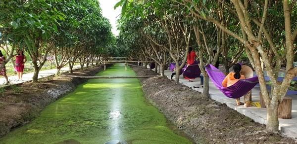 Khách thăm quan nghỉ ngơi dưới vườn trái cây, trên những chiếc võng màu tím - Ảnh: Thanh Nguyên