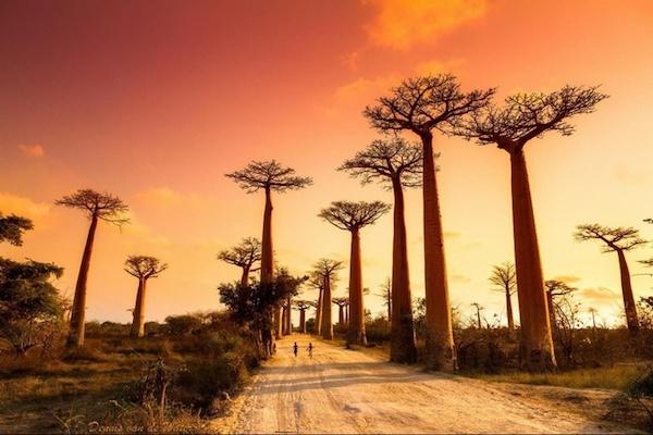 Hành trình đến Madagascar kì bí