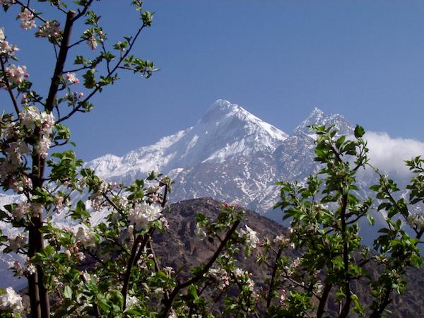 Sững sờ với rừng hoa táo thơm lừng ở Nepal