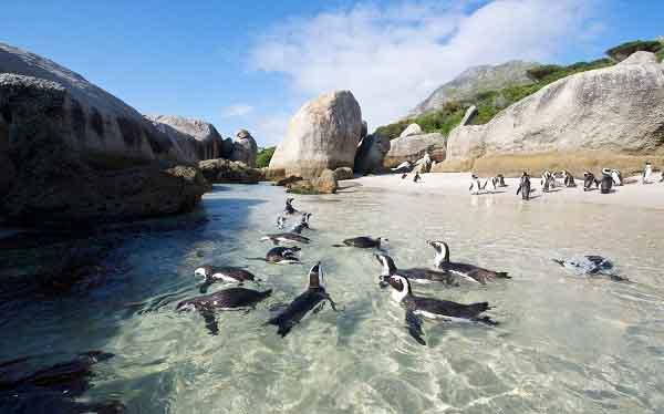 Rong ruổi Cape Town cực kì thú vị