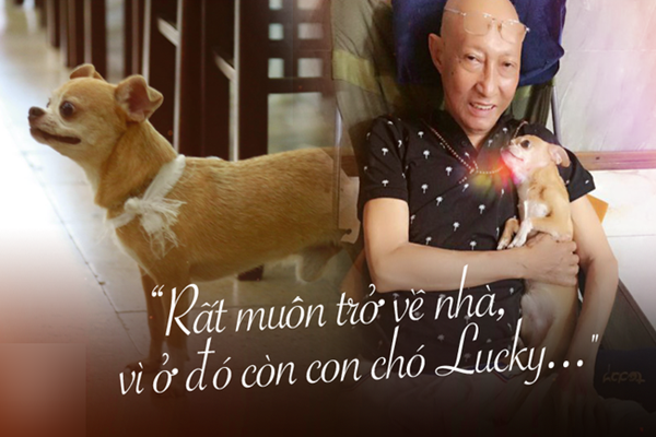 Nghẹn ngào hình ảnh chú cún nhỏ buộc khăn tang trắng, quanh quẩn không rời bên linh cữu cố nghệ sĩ Lê Bình