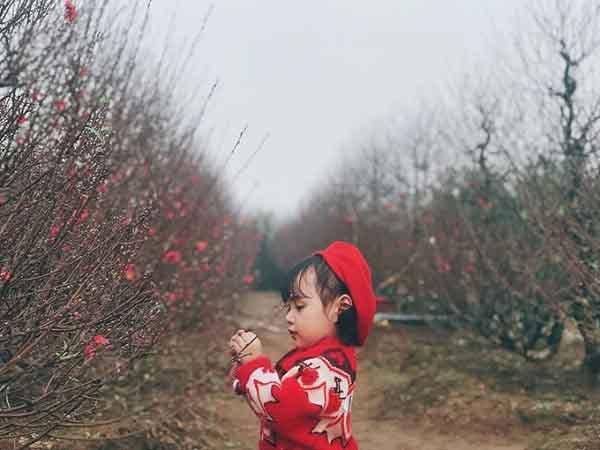 Cô bé hai tuổi rưỡi làm duyên bên vườn đào ai nhìn cũng thích mê