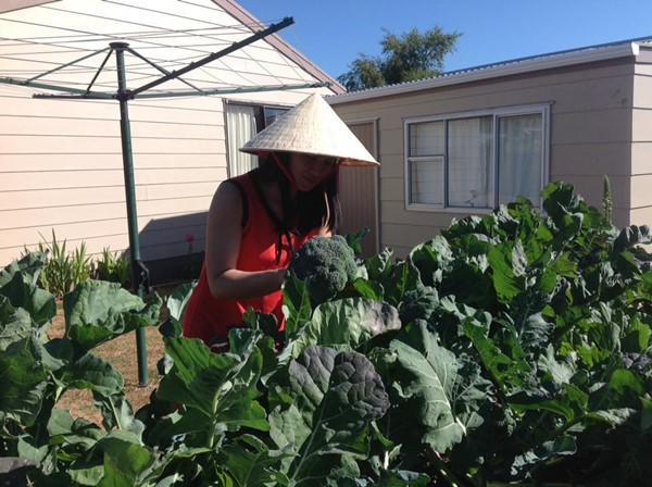 Khu vườn của mẹ Việt ở New Zealand rau quả mơn mởn