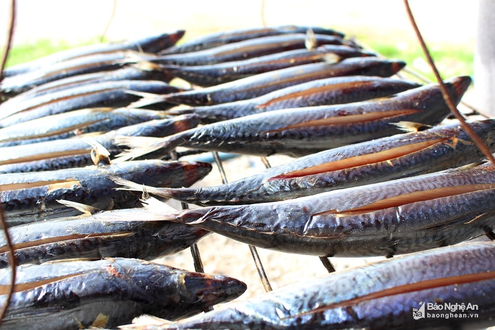 Nhộn nhịp nghề nướng cá ở làng biển Quỳnh Lưu - Nghệ An