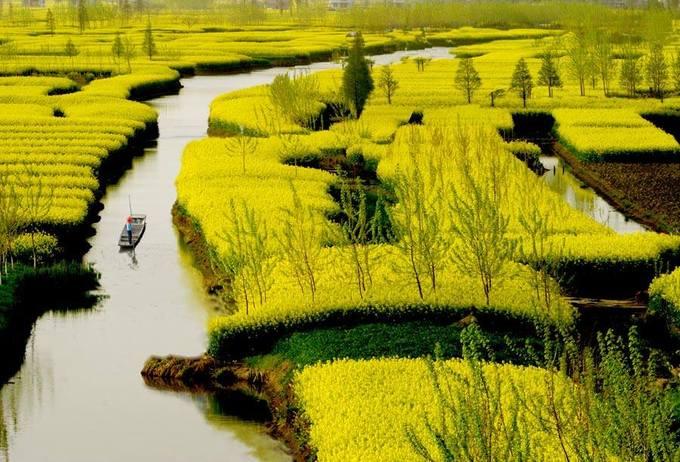 Ở Trung Quốc lại có những thảm hoa cải vàng đẹp như mơ