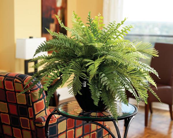 Phòng bệnh cho gia đình bằng cách… trồng cây cảnh