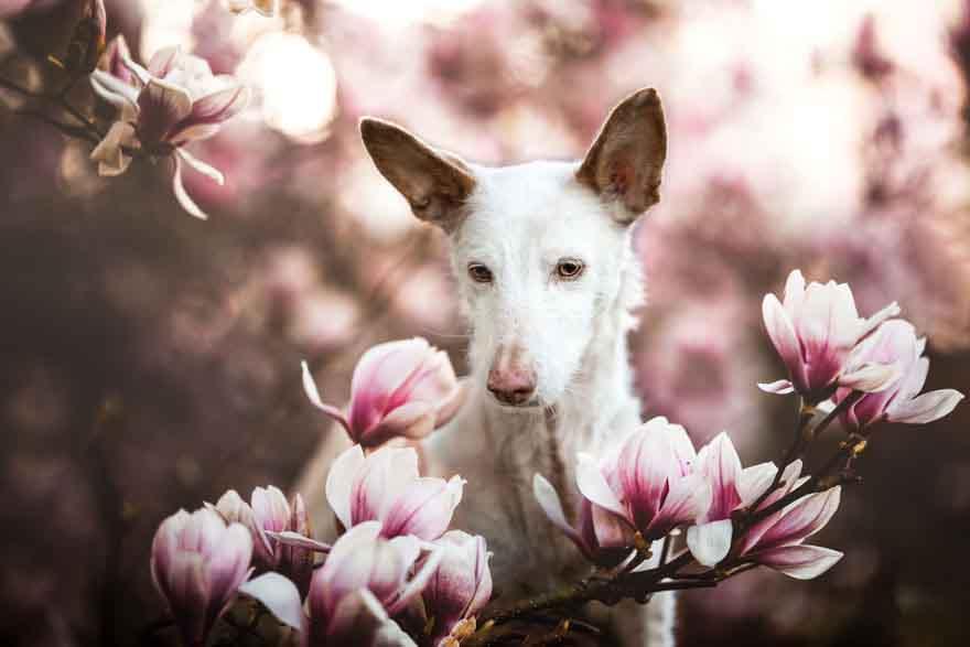 Trao giải thưởng cho các chú chó đáng yêu