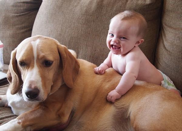 Thói quen chơi cùng vật nuôi, dễ gây bệnh!