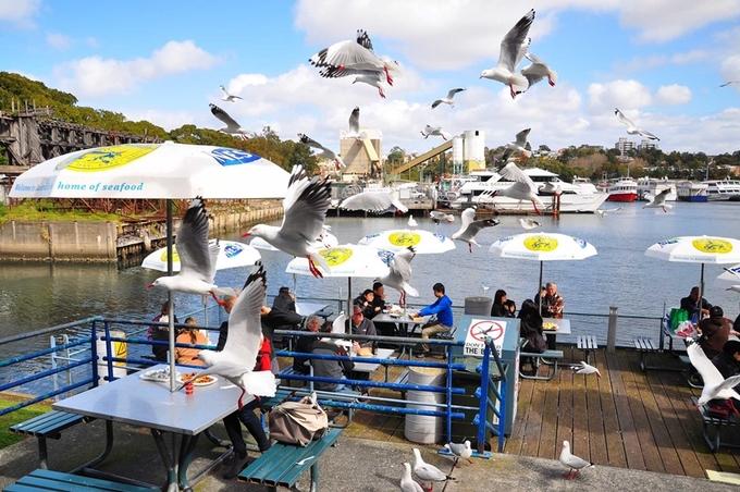 Du khách có thể dùng chung bữa ăn với chim tại chợ cá Australia