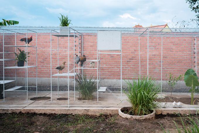 Báo Mỹ đưa tin về một chuồng gà ở Việt Nam