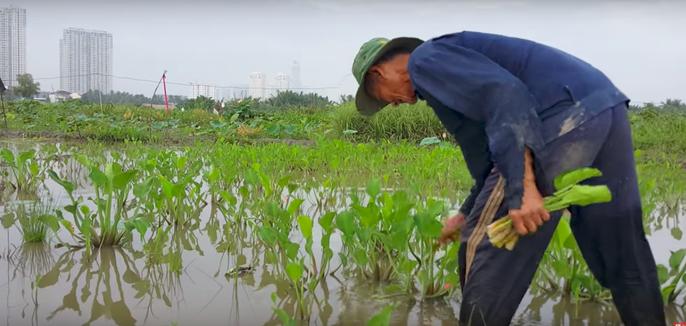 Miền Tây dân dã giữa lòng Sài Gòn